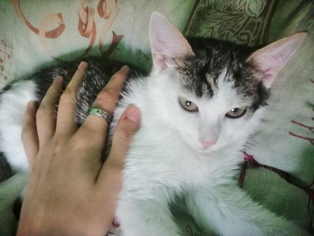 Відам у добрі руки котика вік 3.5 місяців