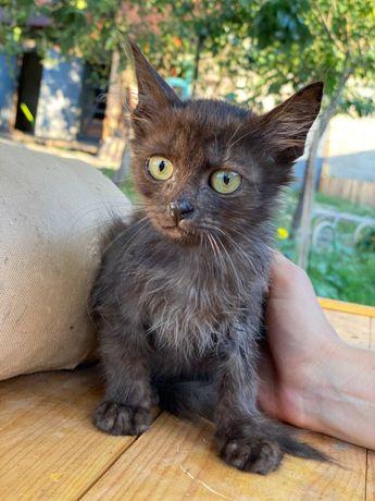 В дар котенок 2,5 месяца