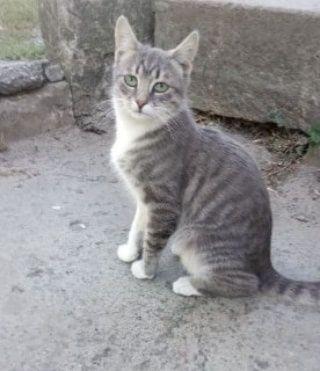 Отдам вискасного котенка ,мальчик ,7 месяцев