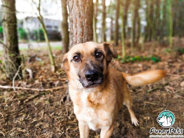 Kochany, przyjacielski pies Dżemik do adopcji!