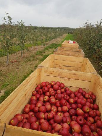 Jabłka różnych odmian hurt-detal