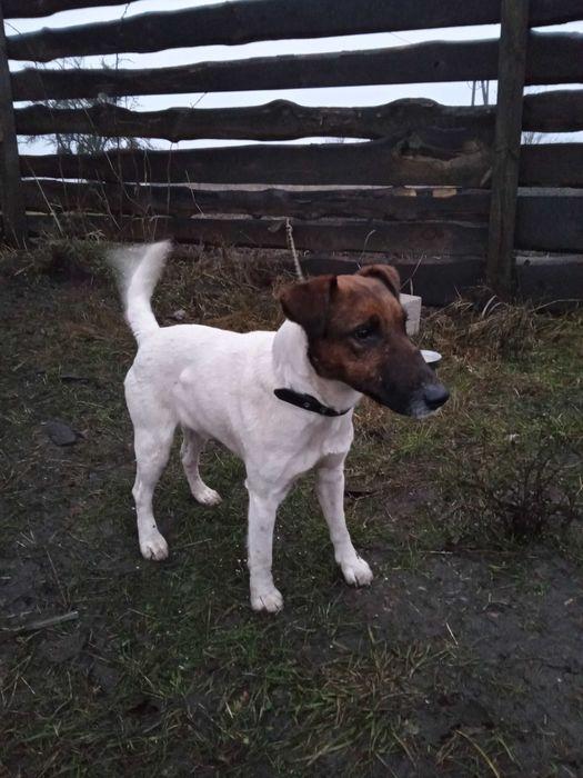 Найденная собака Киев - изображение 1