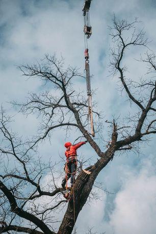 Спилить дерево, спил дерева, кронирование альпинист обрезка удалить