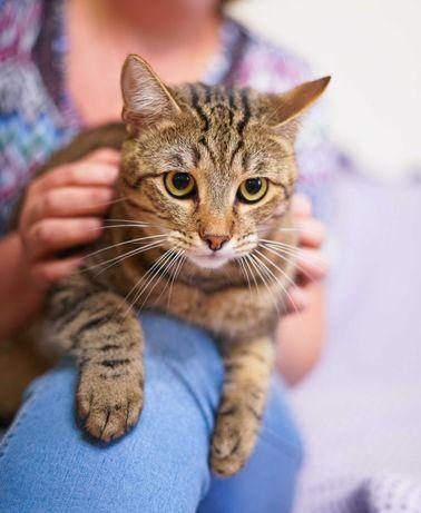 полосатий красень-кіт в пошуках домівки 1р