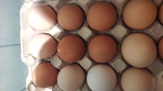 Jajka wiejskie 60 gr Dowóz Do Klienta
