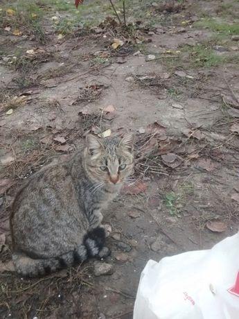 отдам котенка лесного окраса, девочка, 6 месяцев