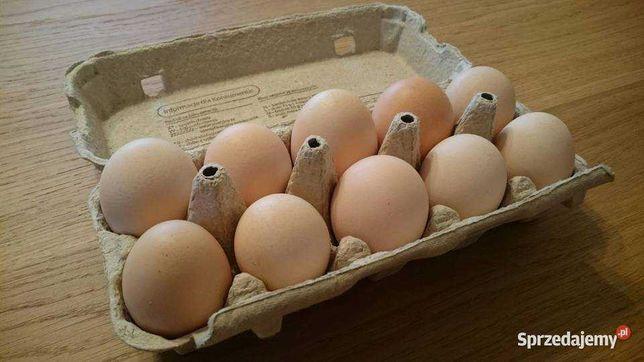 Kurze jaja wiejskie