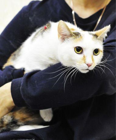 Красивая кошка ШАКИРА ищет дом!