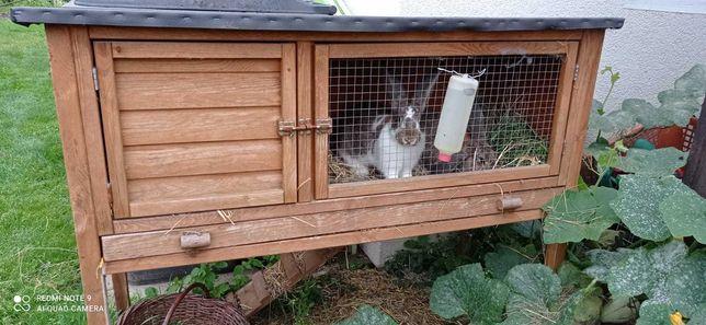 królik tzn. dwa króliki plus klatka dla królików PAKIET
