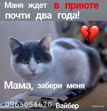 Приют закрывают, пушистики ищут дома! )))
