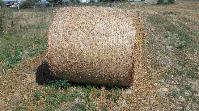 Słoma pszenna i pszenno-żytnia mocno sprasowana siatką 120/120 sucha