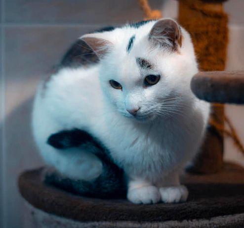 Kotek Adaś chciałby mieć swój domek < 3