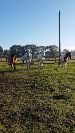 Wynajem koni do zdjęć