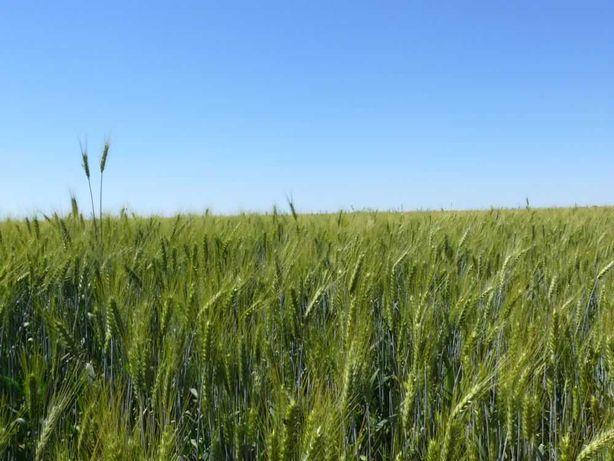 Продам землю сель/хоз назначение