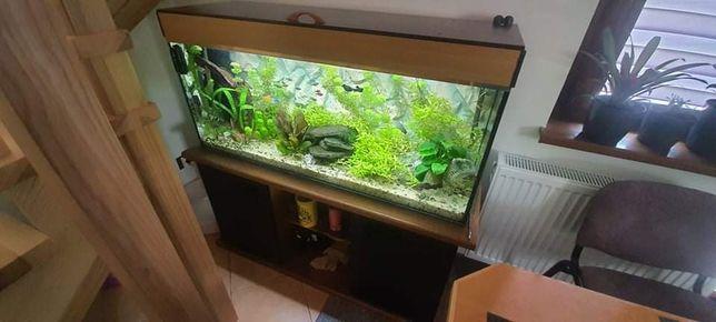 Akwarium 230 litrów