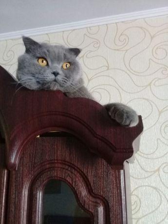 Коти на вязку