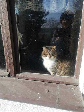 Młody kot szuka domu