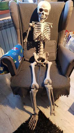 Straszny Szkielet 1:1 halloween