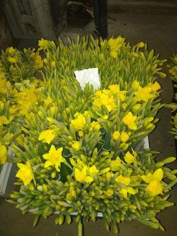 Kwiaty, narcyz, żonkil