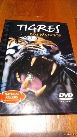 Tigres dos Pântanos - DVD Original + Livro