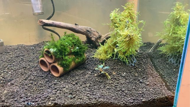 Aquario com camaroes taiwan bee
