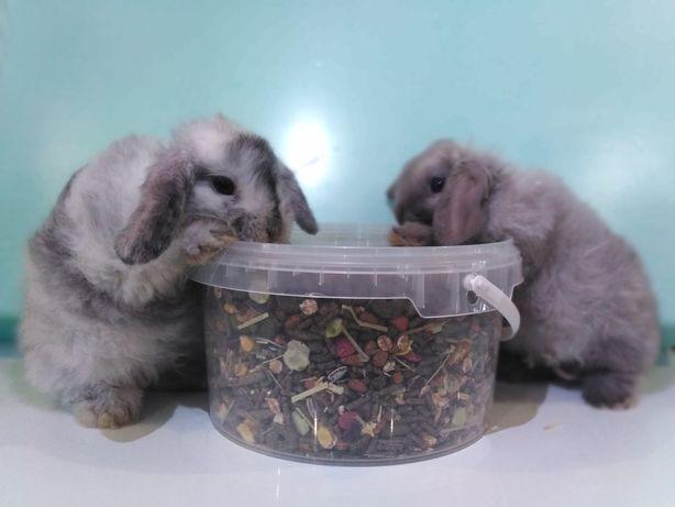 Декоративные кролики баранчики, крольчата, декоративные кролики