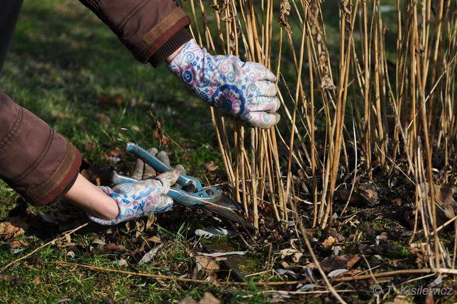 Zakładanie ogrodów pielęgnacja wertykulacja wycinka drzew