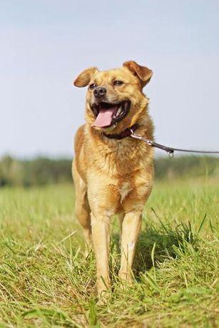 Szalony Skubi szuka domu, który podejmie się pracy z psem