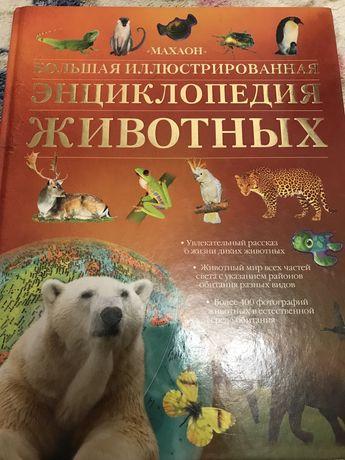 Книга Энциклопедия животных