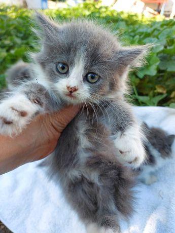 Віддам котиня дівчинку у добрі руки