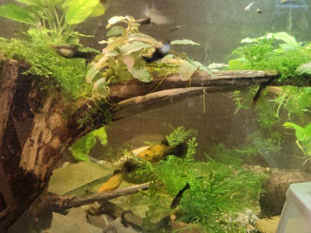 Продам рыбок из домашнего аквариума