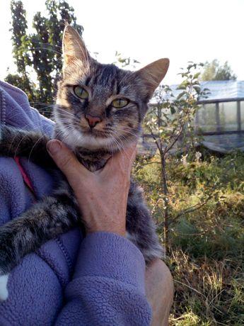 Кошка - мышеловка ищет дом!
