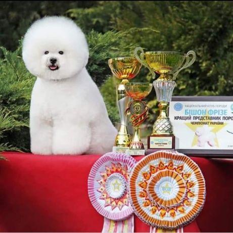 Щенки от Чемпиона Породы Украины 2019