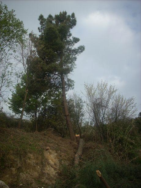 cortador podador de árvores