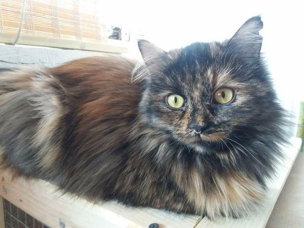 Красива стерилізована кішечка шукає дім!