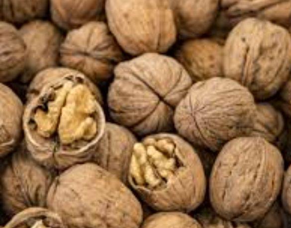 грецкие орехи продам недорого