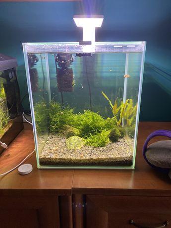 Akwarium Aquael Optiwhite kostka 30 litrow