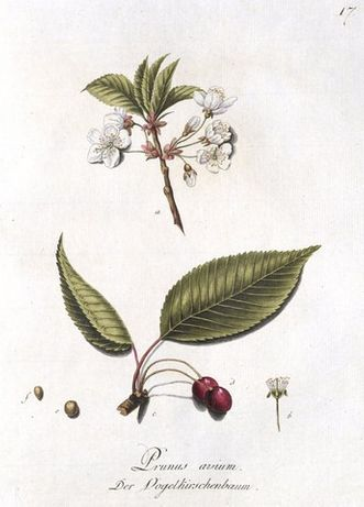 1790 r. ZIELNIK piękne XVIII w. reprodukcje grafik do wystroju wnętrz