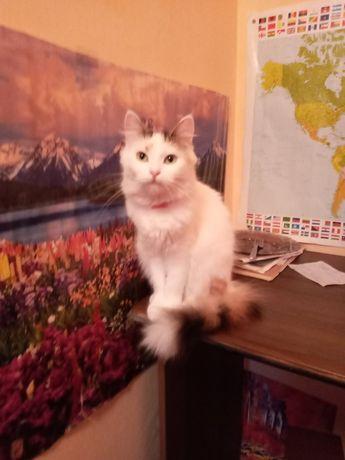 Кошечка в хорошие бесплатно руки кошка кішка