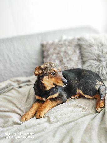 Maksiu szczeniak 5 miesięcy 7 kg adopcja.