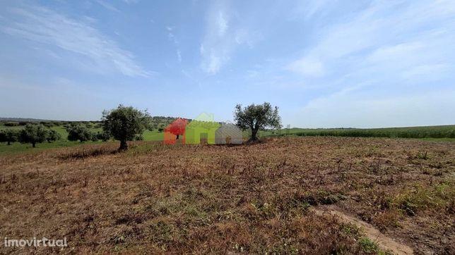 Terreno Agrícola- Beringel