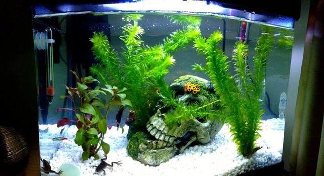 Śnieżnobiałe podłoże do akwarium 5 kg - rozjaśnij swój zbiornik 8-16