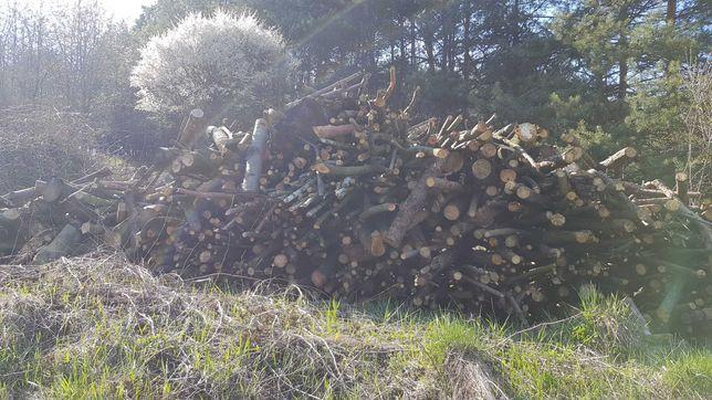 Drzewo z obcinki