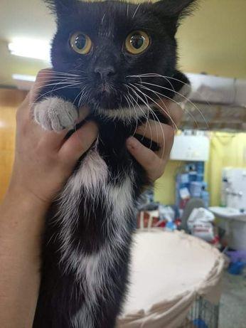 Znaleziono kotkę w Lubinie