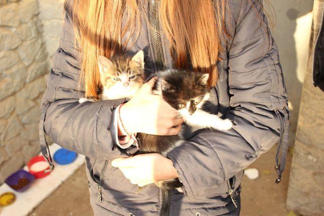 Кошенята в добрі руки кіт