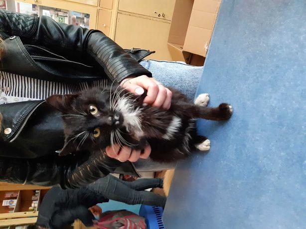 Котик в любящие руки