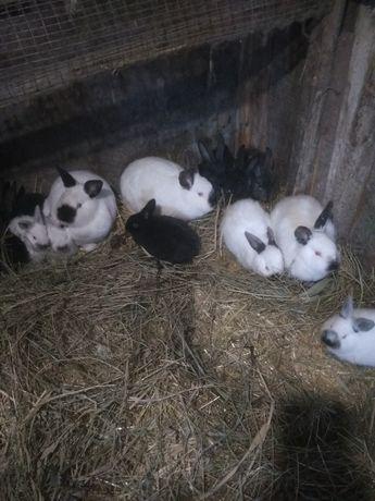 Кролики не дорого!!!
