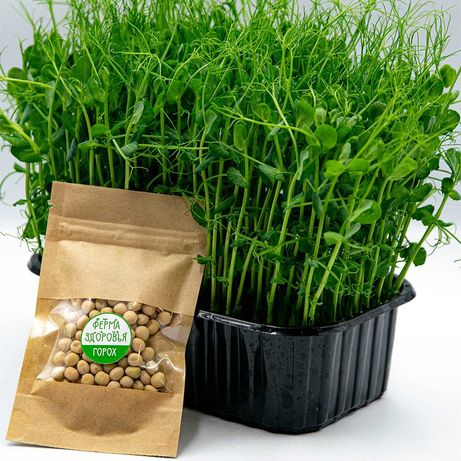 Семена гороха для микрозелени, горох на микрогрин семена опт и розница