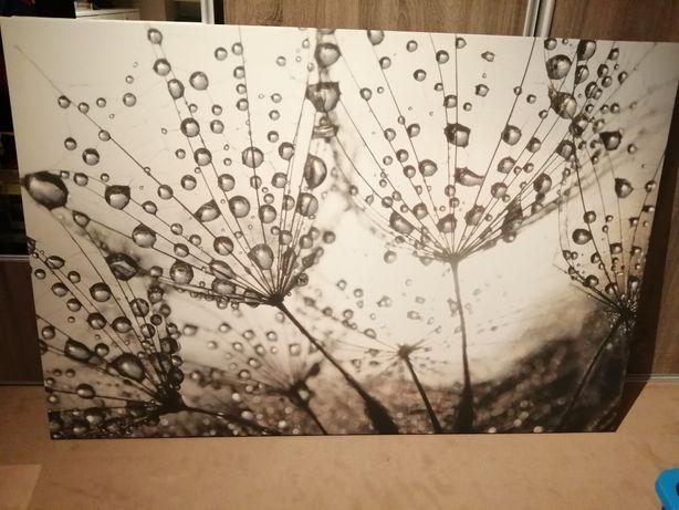 Obraz na płótnie 150x100