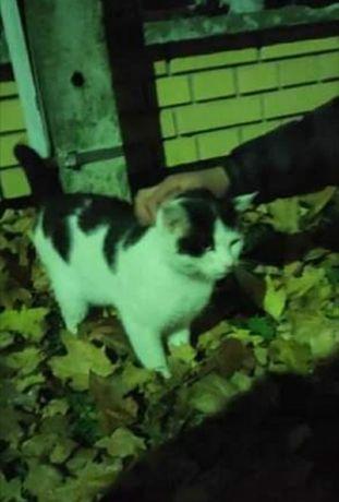 Błąka się biało-czarny kot/kotka